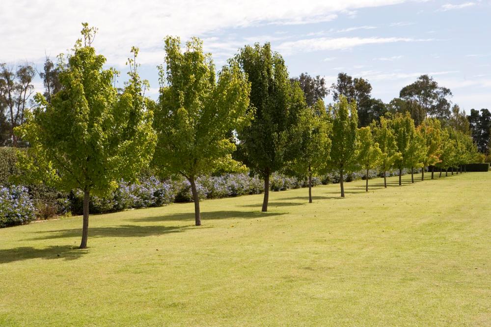 Griffith - Paul Bangay Garden Design en 2020 | Jardines, Casas