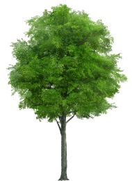 Realistic Tree Tree Tree Images Grass Vector Clip Art