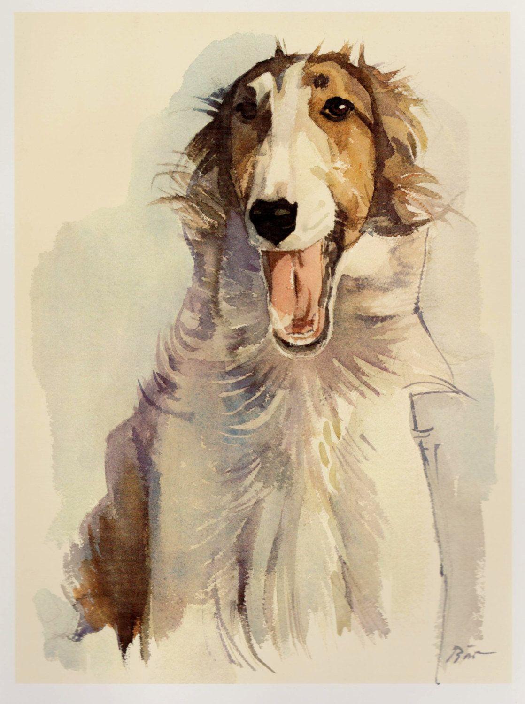 English Print Borzoi Dog Russian Wolfhound Art Picture