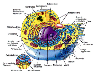 cell structure and function assingment biology cell
