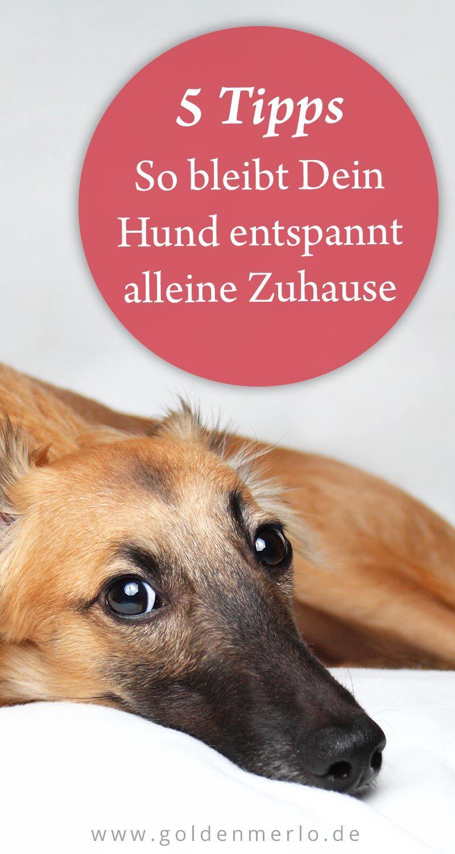 Pin Von Jennifer Stengel Auf Hund Hunde Welpen Hunde Welpen Erziehung