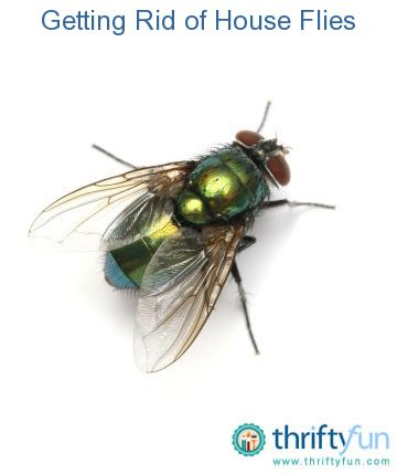 13++ Why are there so many flies in my yard information
