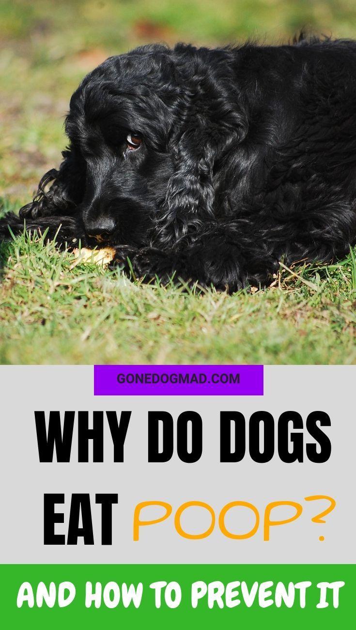 Pin On Dog Stuff