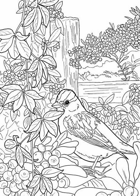 Pájaro | DIBUJO AVES. | Pinterest | Colores, Dibujos para colorear ...