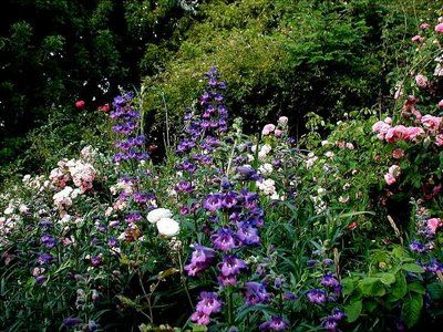 Gertrude jekyll type english garden border cottage garden pinterest garden borders for Gertrude jekyll gardens to visit