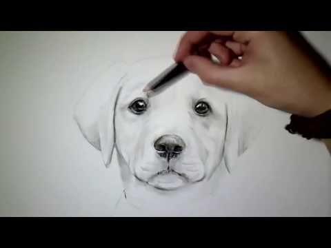 Hund Zeichnen Tutorial Zeichnen Lernen Für Anfänger Youtube
