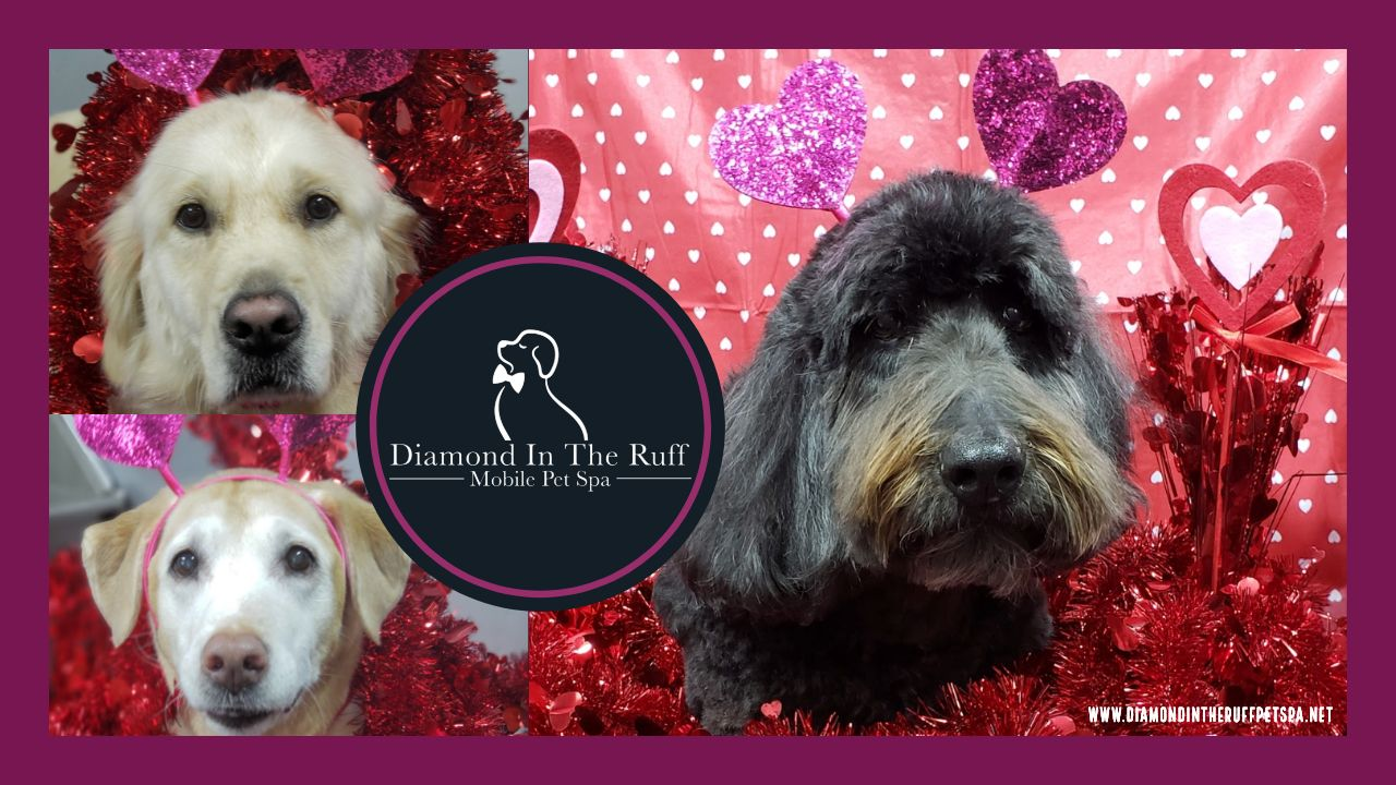 Cute Dogs From Diamond In The Ruff Mobile Pet Spa In Edmond