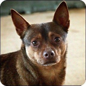 Shreveport La Wirehaired Fox Terrier Mix Meet Tramp A Dog For Adoption Http Www Adoptapet Com Pet 6791679 Shreveport L Terrier Fox Terrier Dog Adoption