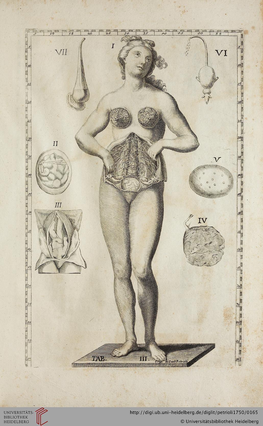 Petrioli, Gaetano; Albinus, Bernhard Siegfried [Hrsg.]: Le otto ...