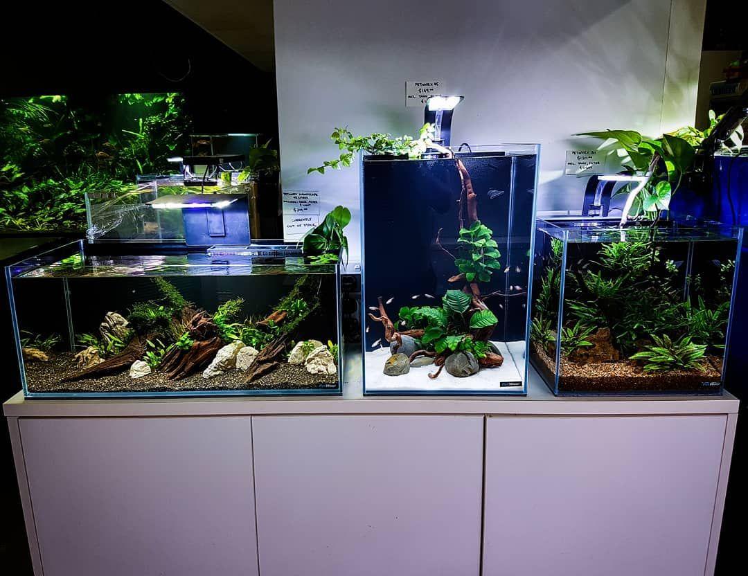 Three Nano Aquascapes All Without Co2 Perfect For A Kitchen Bench Or Bedside Table Aquarium Aquascape Aqua Aquascape Aquarium Fish Tank Aquascape Aquarium