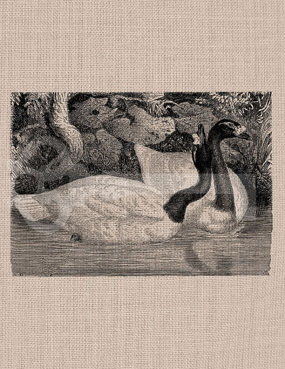 Canadian Geese Digital Download Image No385 by TanglesGraphics, $1.00