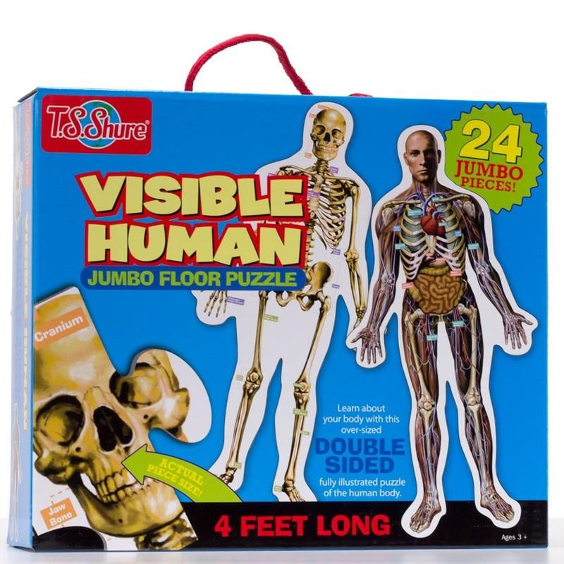 Visible Human Floor Puzzle. Toddler size floor puzzle of the human ...