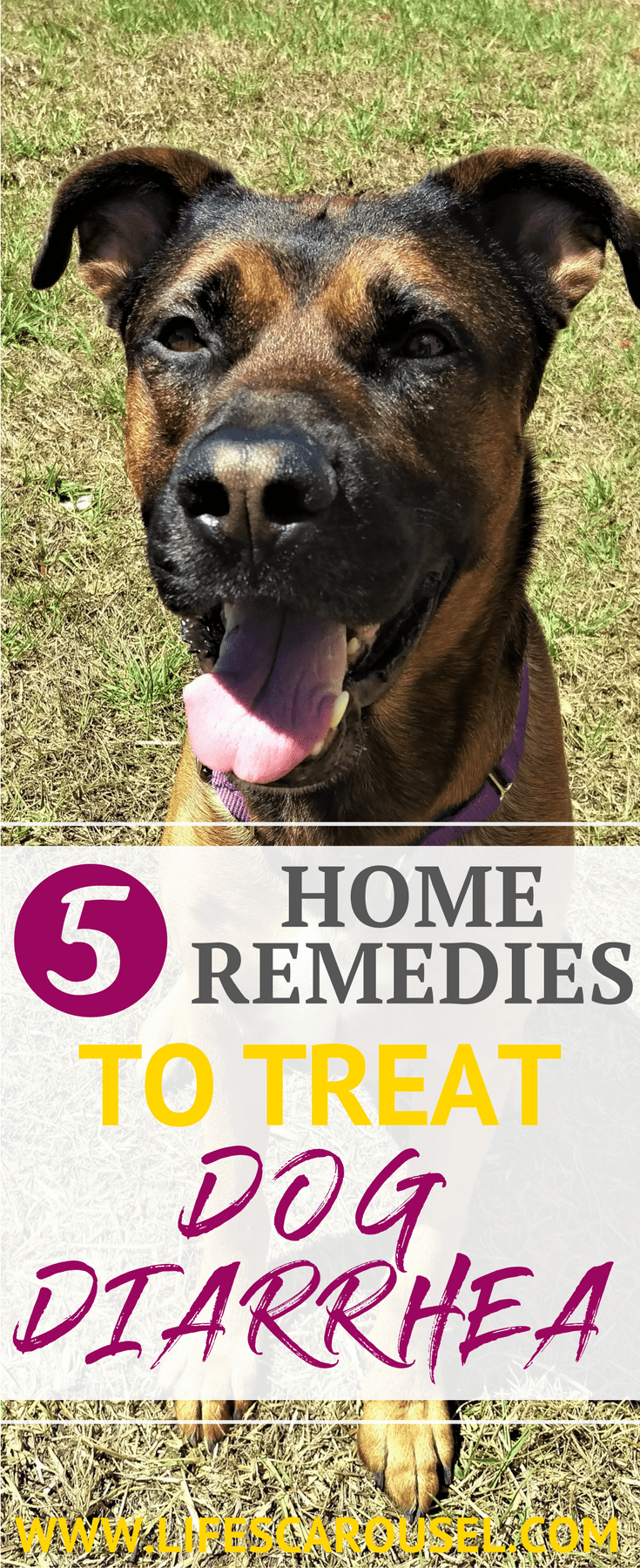 Dog Diarrhea Home Remedies 5 Best Fast Acting Remedies Diarrhea Remedies Dog Diarrhea Remedy Home Remedies
