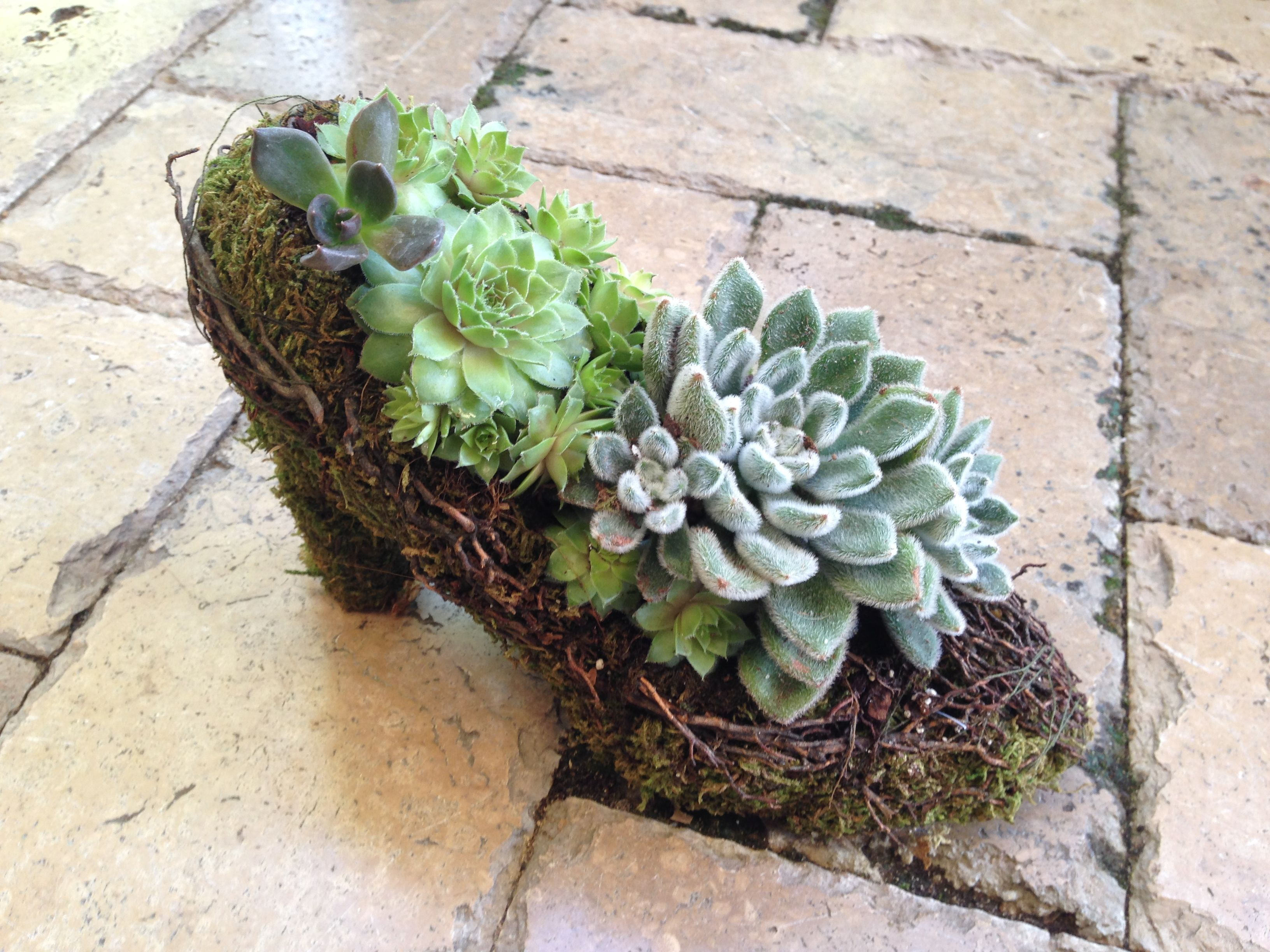 Succulent garden planted in a moss shoe by our team!