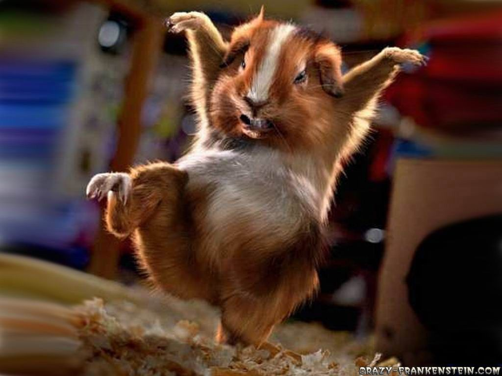 Funny Animal Wallpaper Askcom Image Search Funny animal