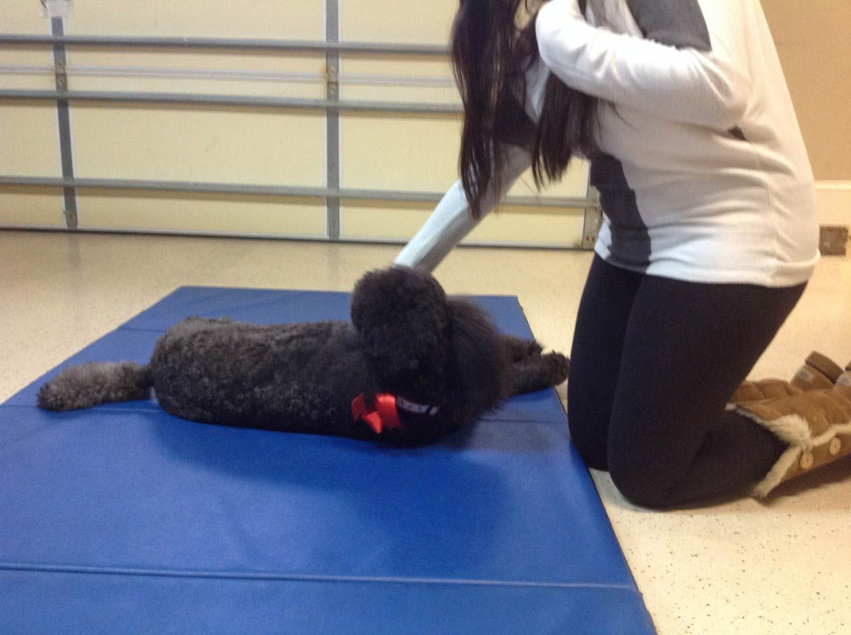 How to teach a dog to roll over dog training dog hacks