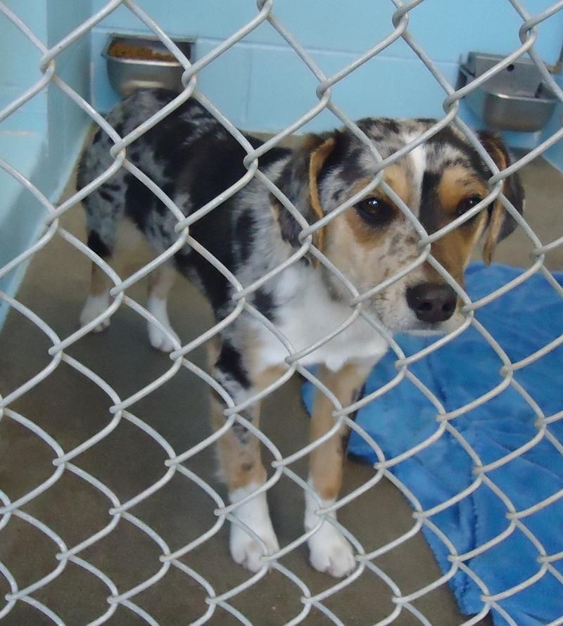 Dogs Available At Tulsa Animal Shelter Most In Need Longest At