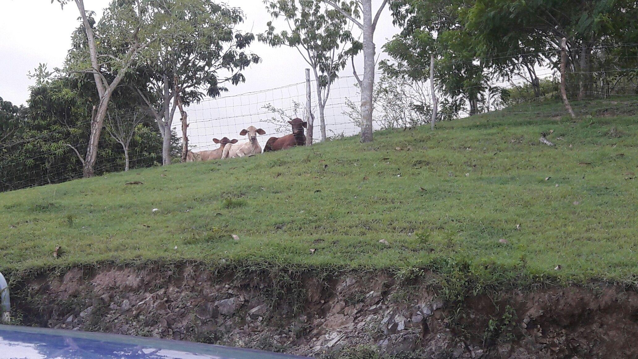 The pretty cows 🐮muuu!!!