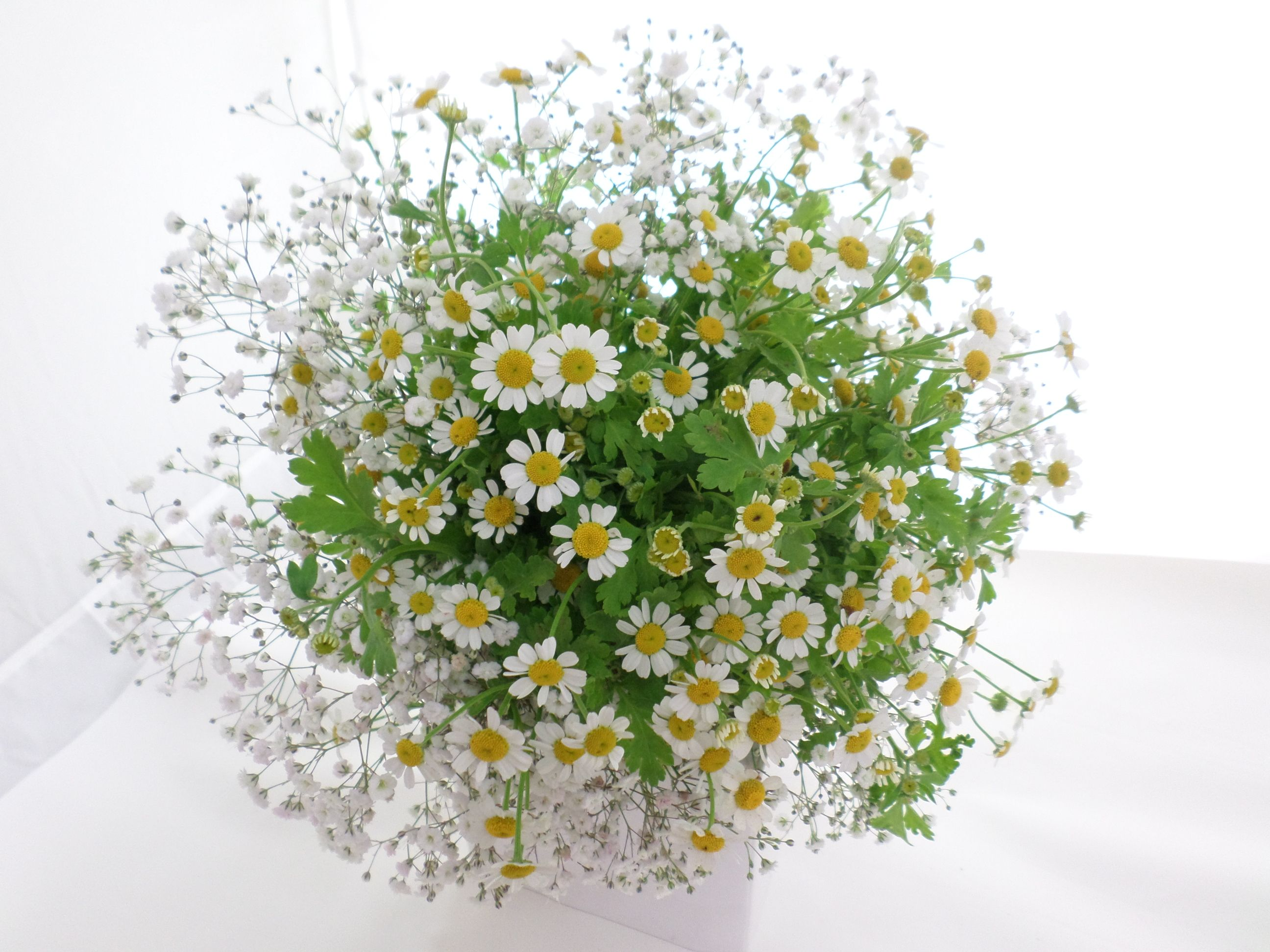 Hand Tied Wild Posy Of White Daisies And Babies Breath Created By Florist Ilene Hamilton Nz Blumenstrauss Schone Blumen Blumen Blumenstrauss