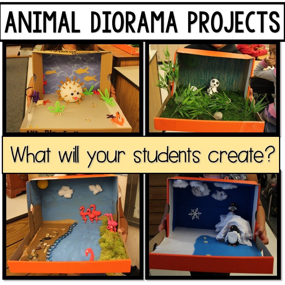 I was first introduced to the idea of creating Animal Dioramas when ...