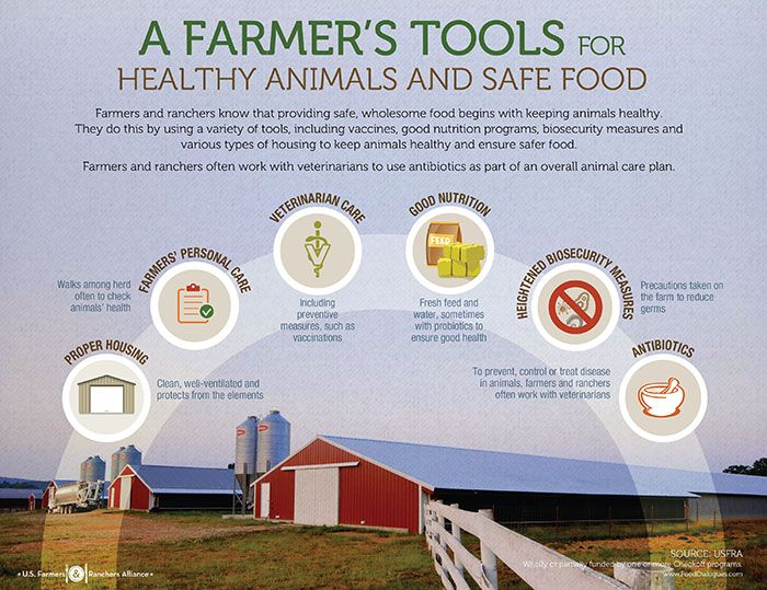 #Antibiotics are just one of the many tools #farmers use to keep animals healthy and provide safe #food