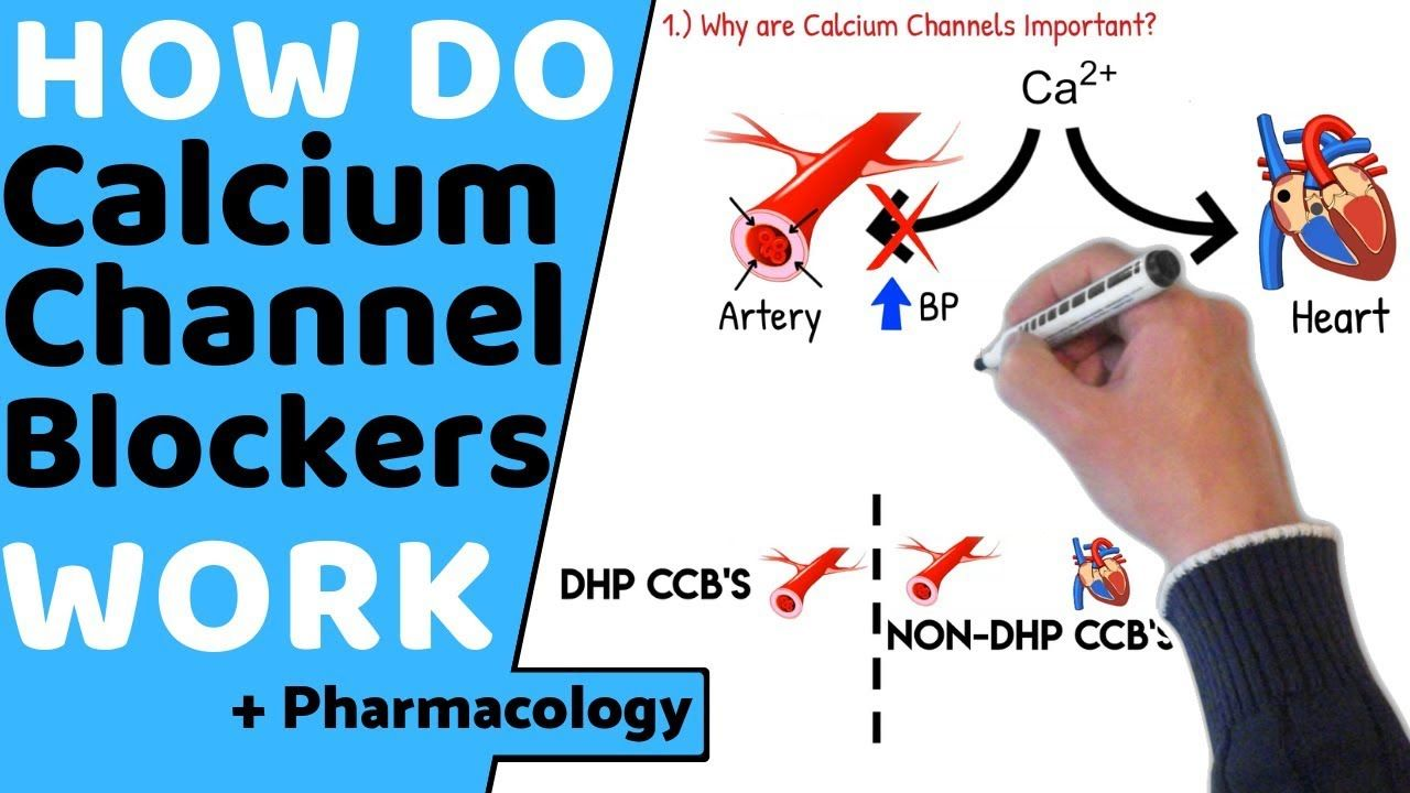 How do Calcium Channel Blockers Work? (+Pharmacology) in 2020 | Calcium  channel blockers, Pharmacology, Medical information