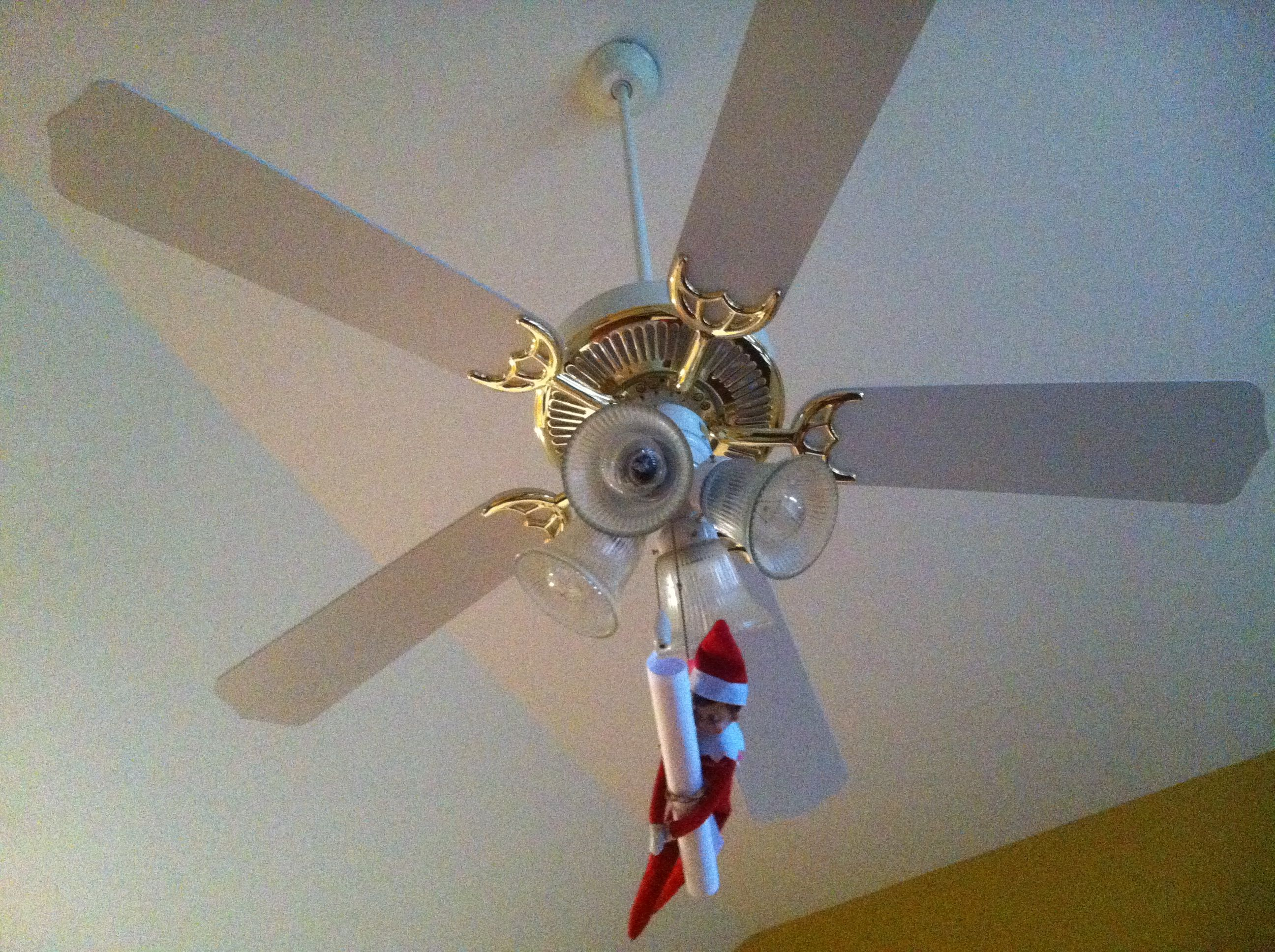 Elfie was hanging from our ceiling fan cord this morning Looks