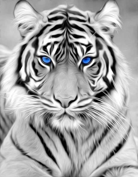 Pin By Renata Halama On Art Gifs Tiger Pictures Tiger Spirit Animal Animals Beautiful