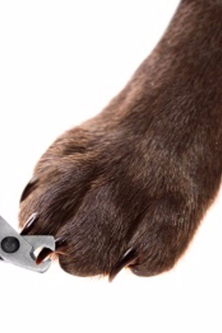 Dont be afraid to trim your own dogs nails dog nails