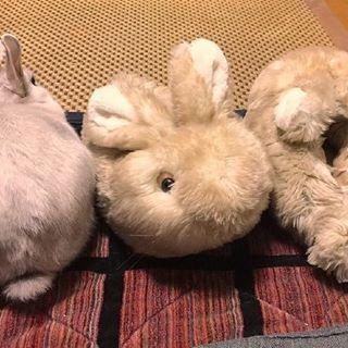 It Thinks The Slippers Are Its Mates 9gagmobile 9gag Rabbit Fluff Bunny Credit Tw Ichthy0stega Followback Lol L4l Tagforlik Rabbit Animals Bunny