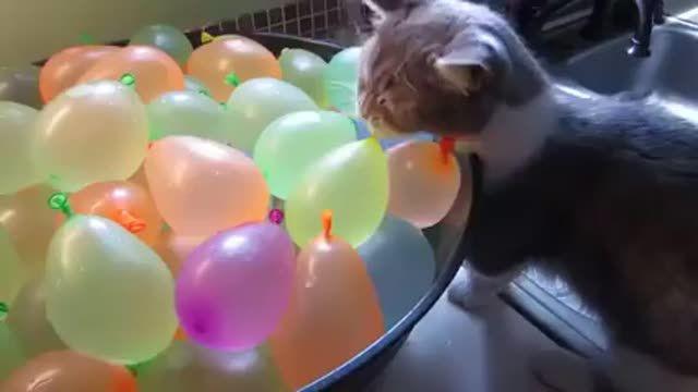 Este gatito se queda muy sorprendido al ver cómo desaparecen los globos de agua :)