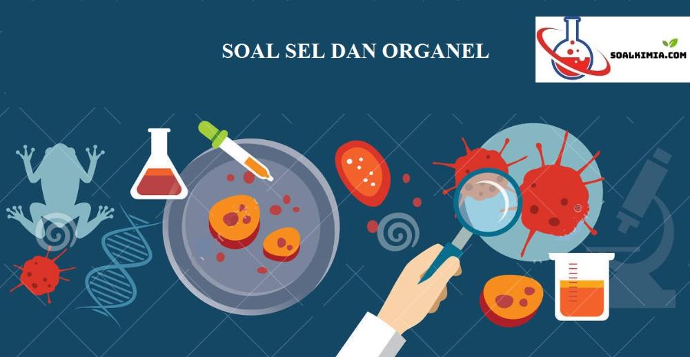 50 Soal Sel Dan Organel Biologi Pilihan Ganda Pembahasan Biologi Plasma Darah Otot Lurik