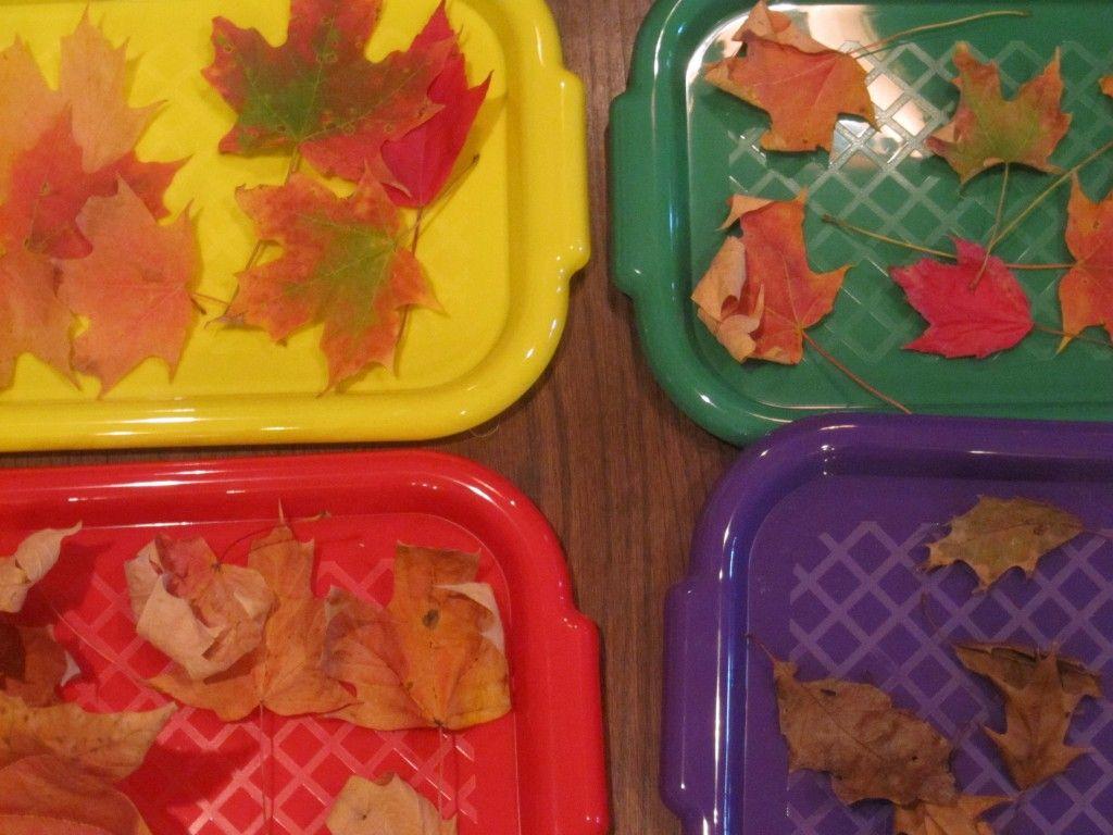 Crunchy Leaf Science And Math In Preschool