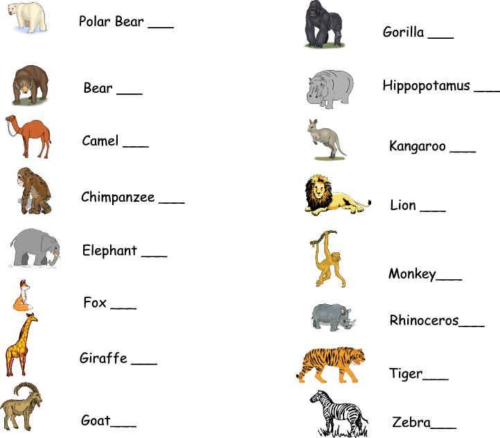 free worksheets zoo animals worksheets free math worksheets for kidergarten and preschool. Black Bedroom Furniture Sets. Home Design Ideas