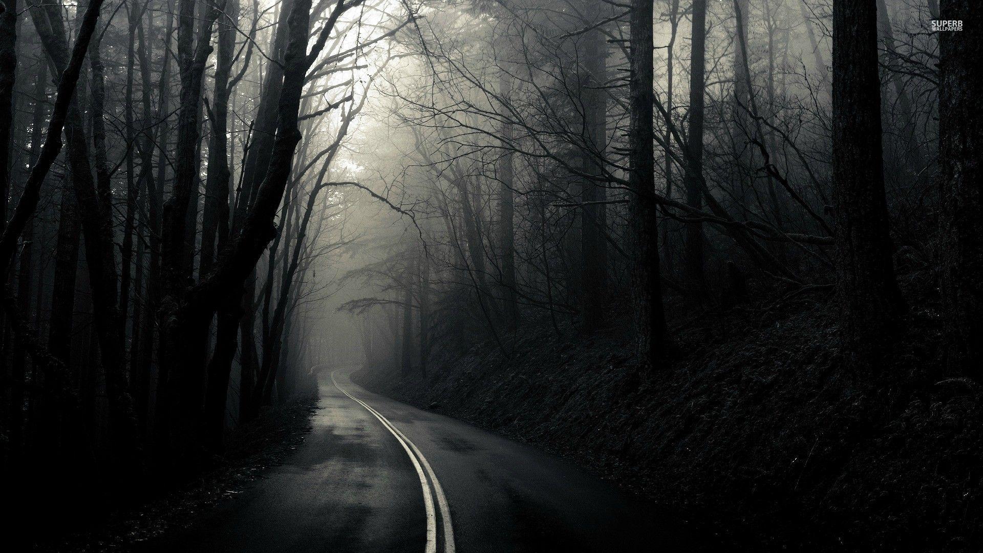 Road Through the Dark Woods Wallpaper Dark wood