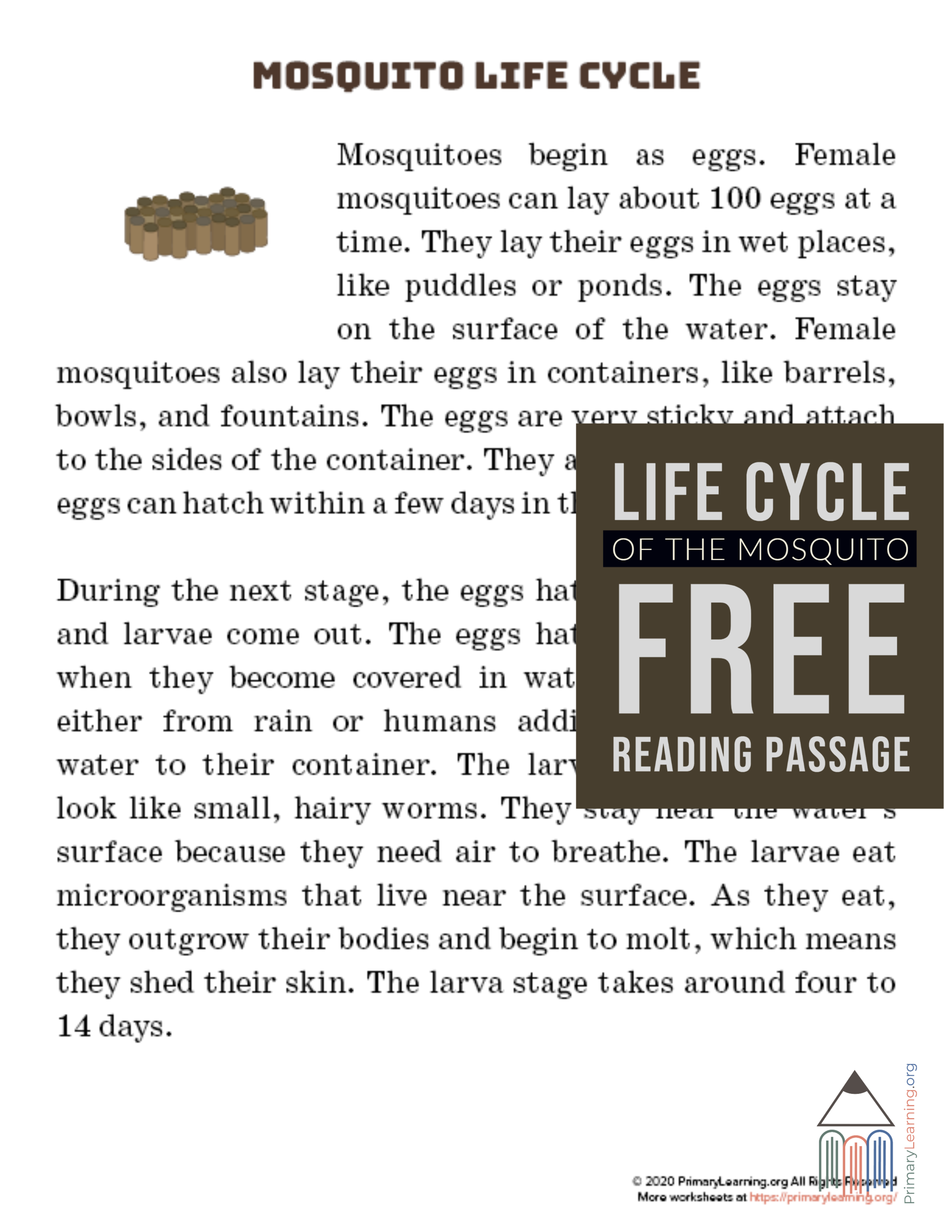 Mosquito Life Cycle Article In