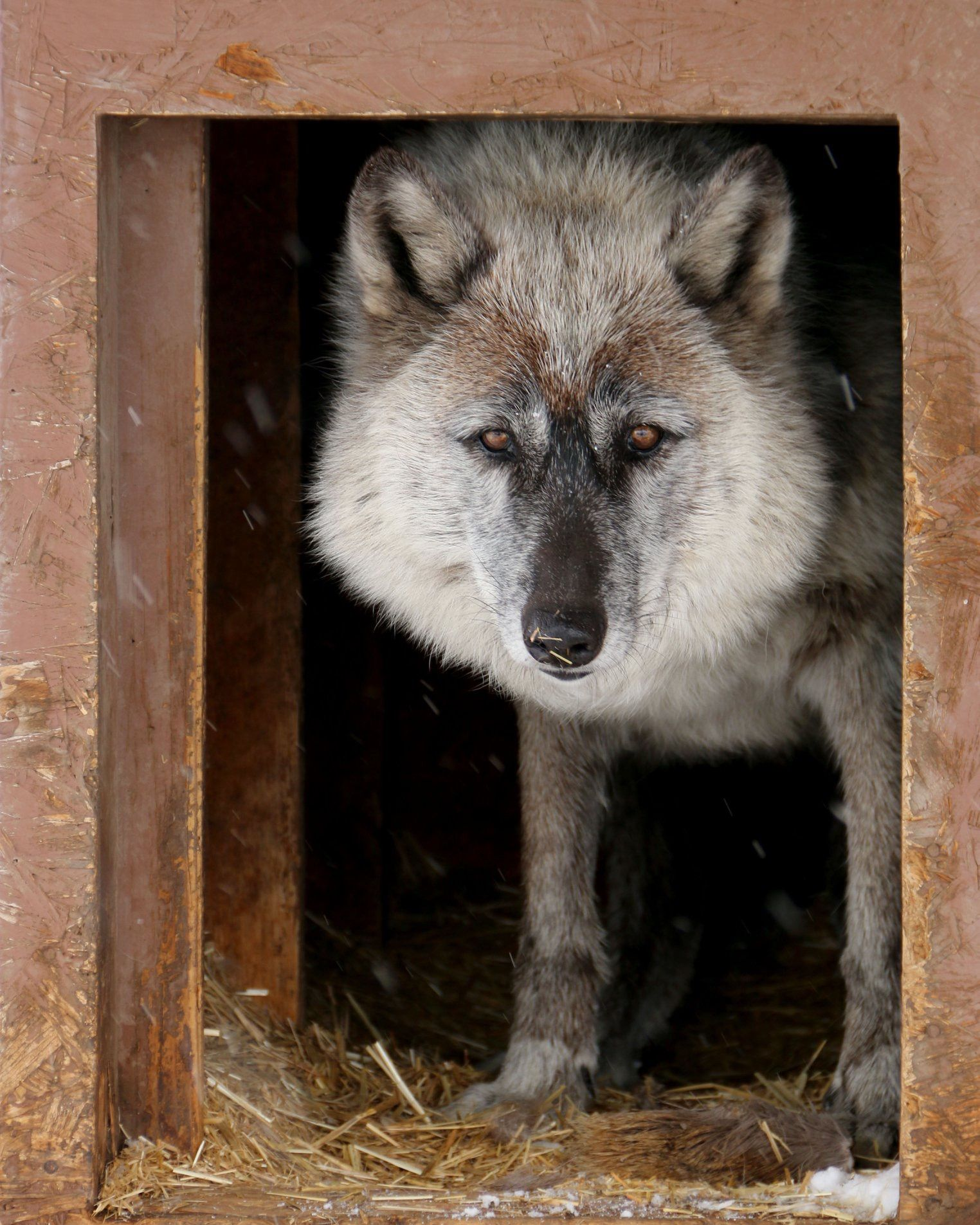 Cherokee RockyMountainWildlife Foundation photo by Kim