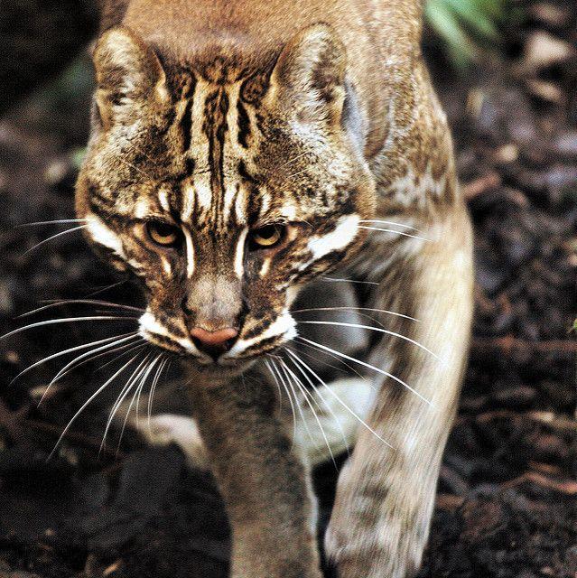 Животные от пользователя Petrova Elizaveta на доске «Кошки
