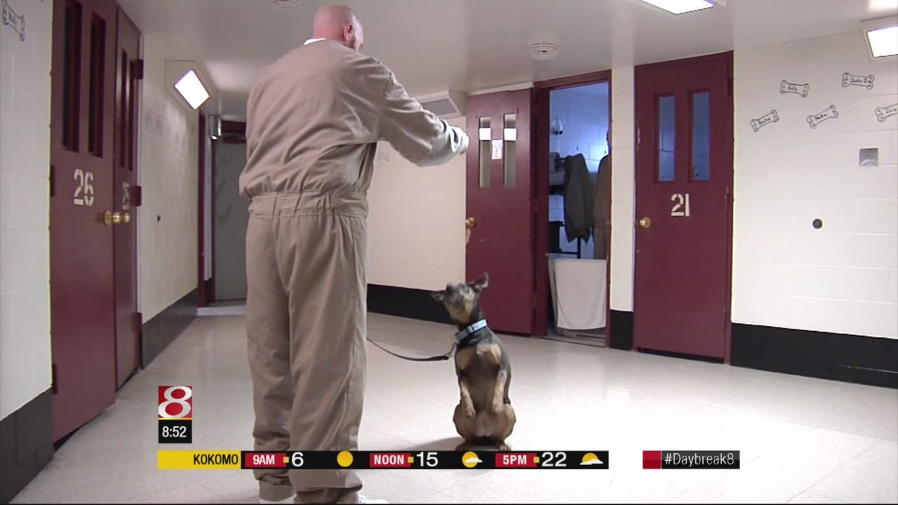 Local Prison Program Helps Train Dogs For Adoption Dog Training
