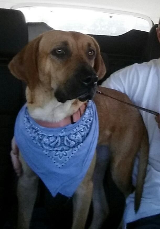 Adopt Lil Ann on Black mouth cur dog, Dog adoption, Adoption