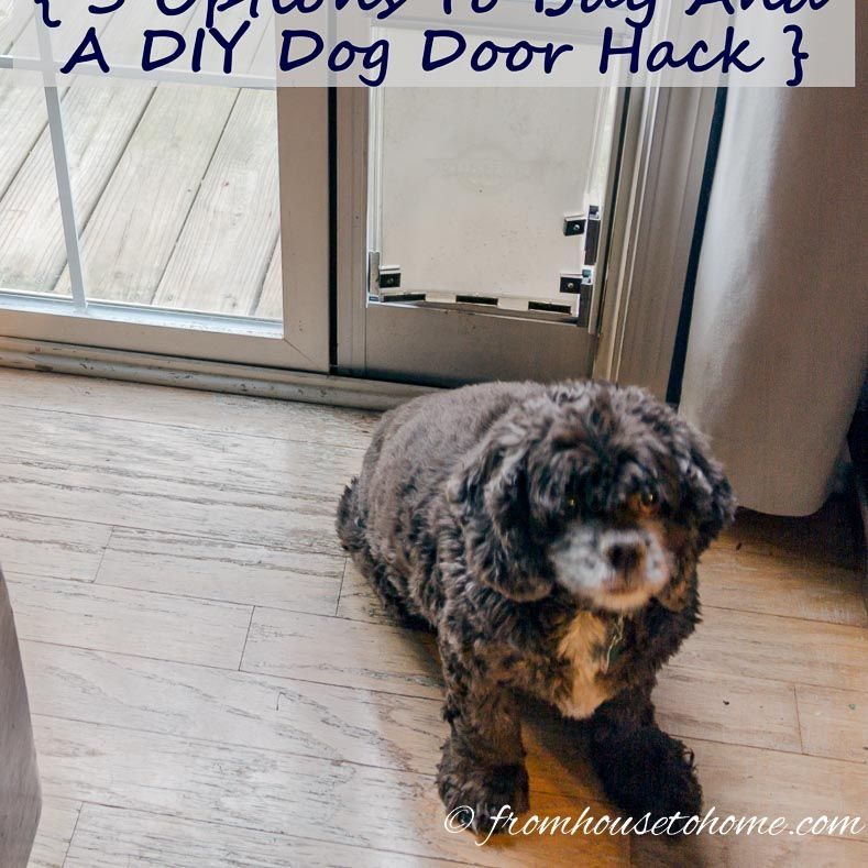How To Keep The Cat From Using The Dog Door Dog And Cat