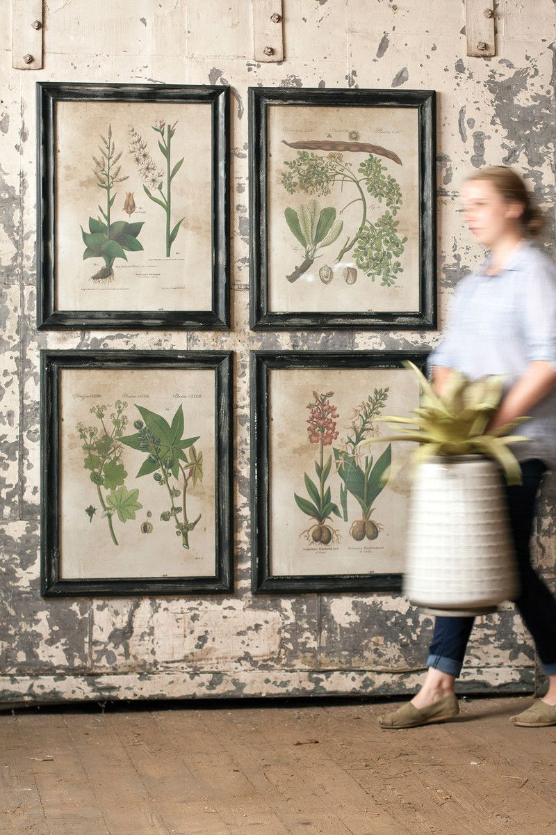 Botanical print collection inspired by vintage flower specimen illustrations this set of four prints comes framed and under glass