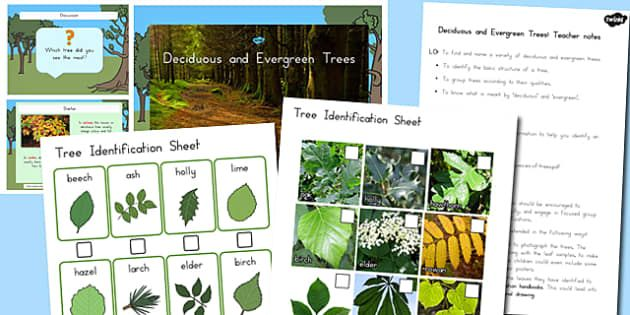 Photo of Deciduous and Evergreen Trees Task Setter PowerPoint and