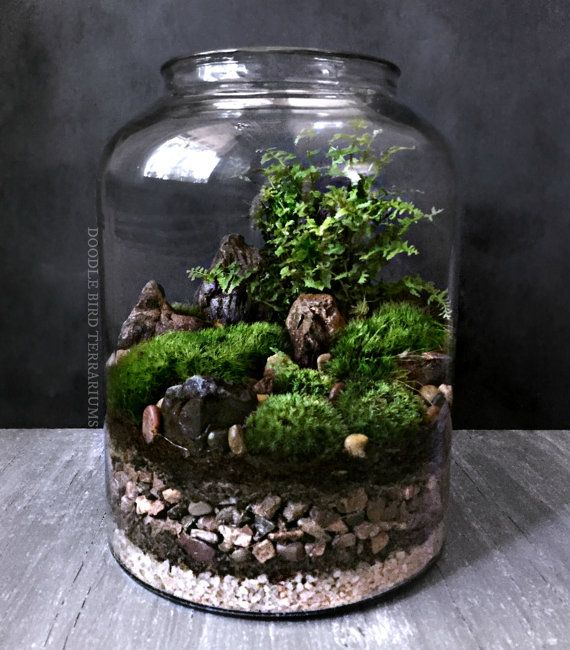 Waterfall Terrarium With Live Moss Plants In Hex Glass Jar Rasa