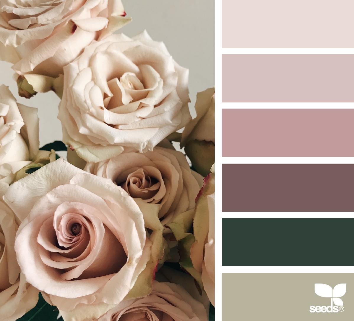 цвет увядшей розы фото с чем сочетается качественного рисунка