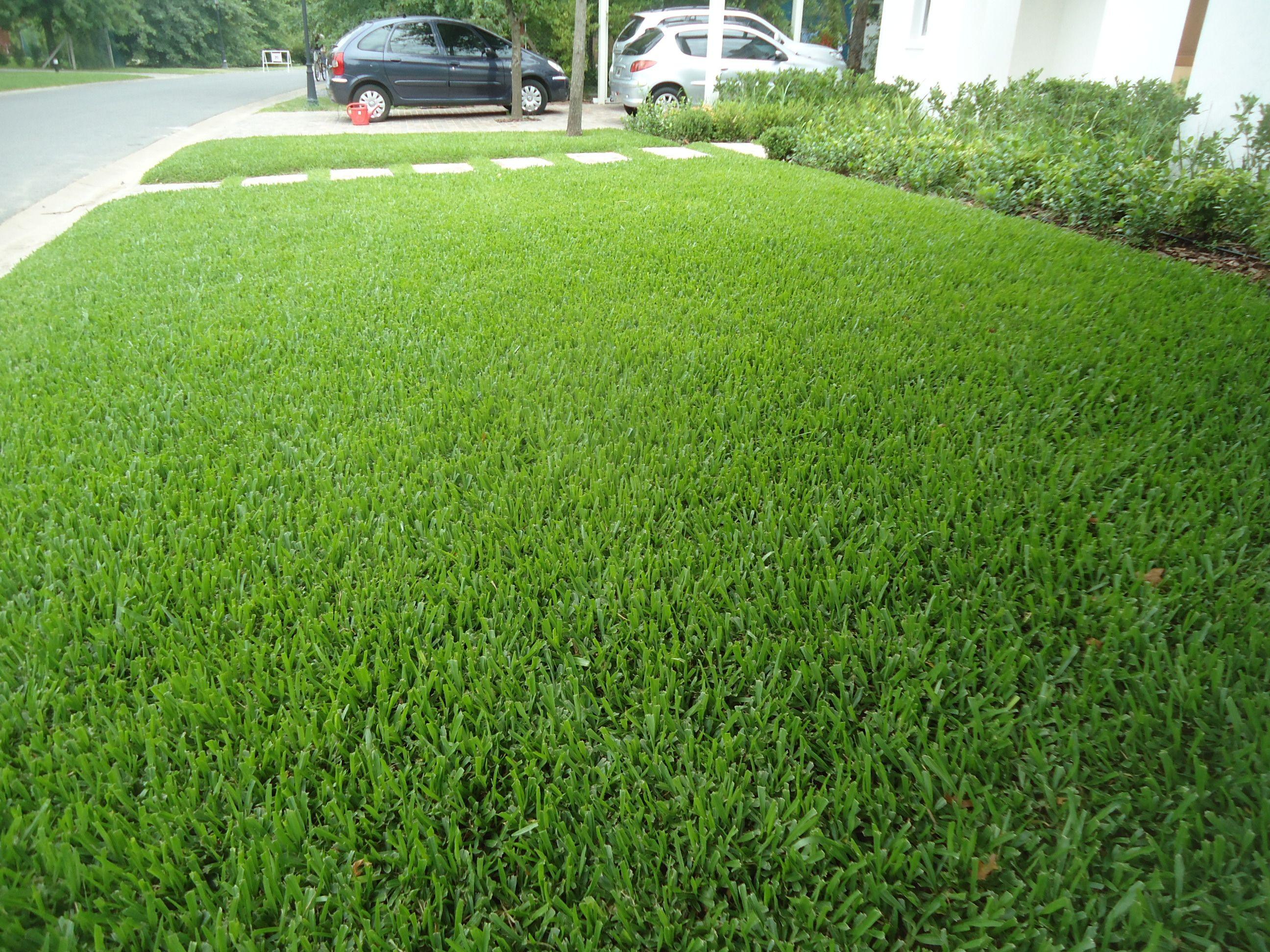 oda al verde grama bahiana en jardin de entrada front