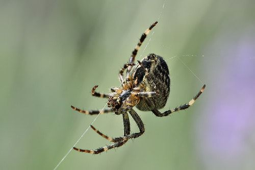 Gift gegen spinnen