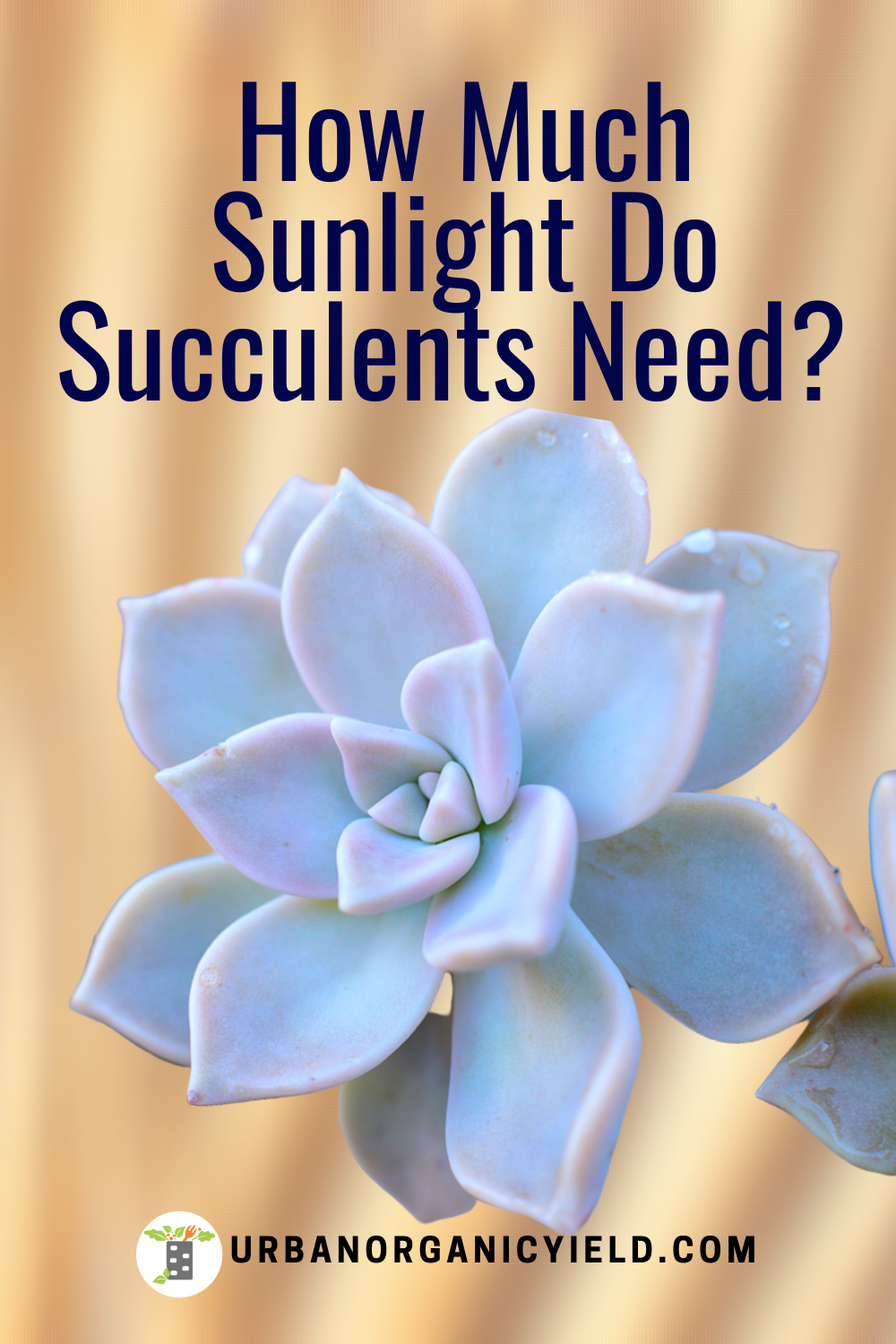 Do Succulents Need A Lot of Sun? in 2020 Succulents, Sun