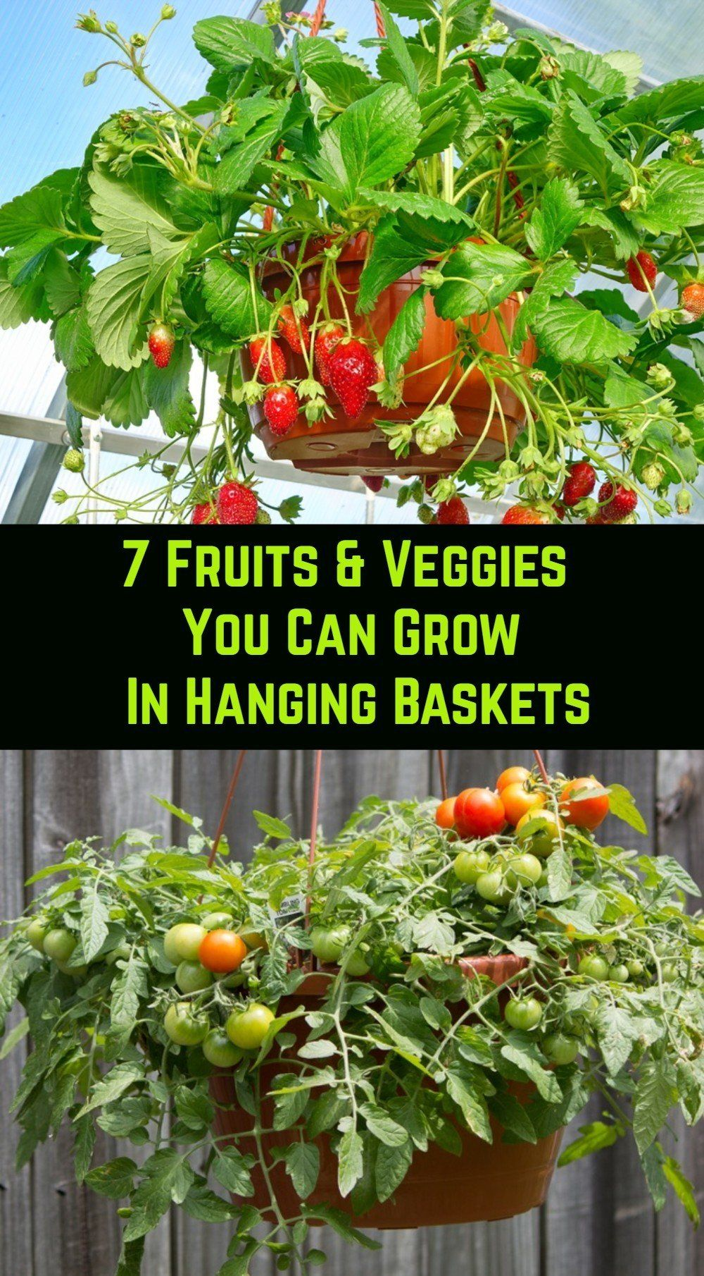 Planting fruits and veggies in hanging baskets saves space, time and provides you with lots of fresh food if done correctly. Here are our top 7 things you could grow in baskets.