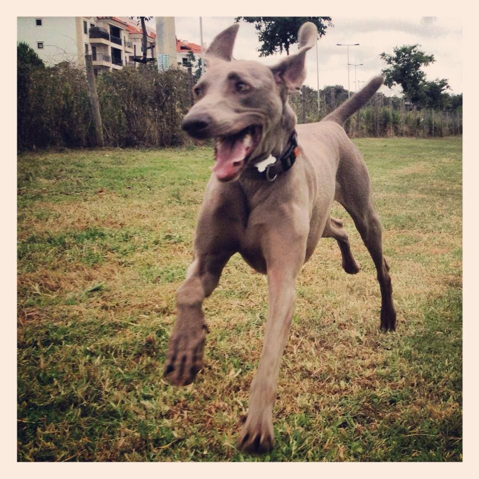 Cão do Gustavo Santos